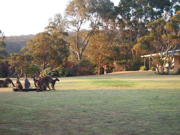 Riverside-Retreat-Walpole-Chalets-Kangaroos-2