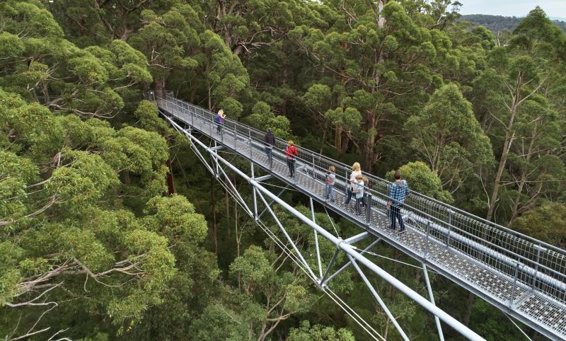 Riverside-Retreat-Walpole-Chalets-tree-top-walk