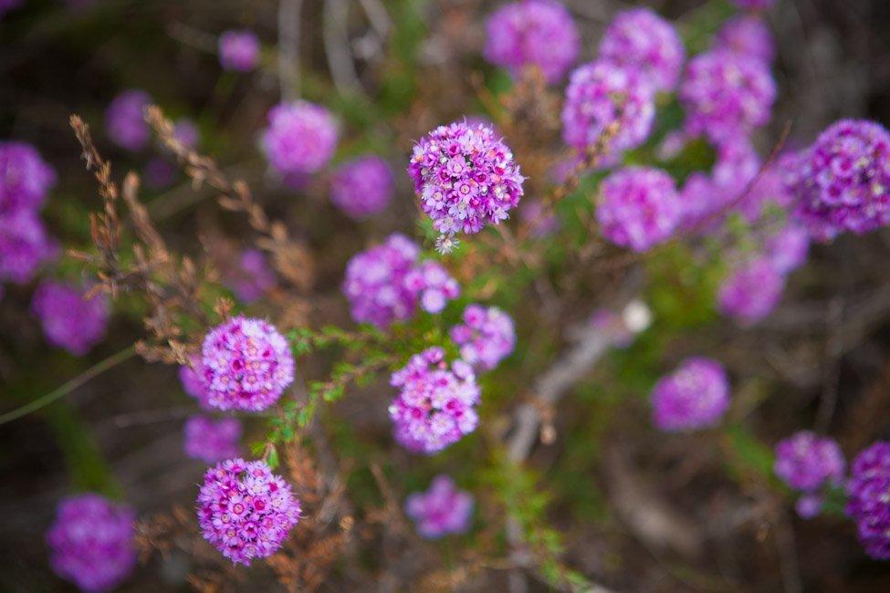 wildflowers nornalup riverside retreat